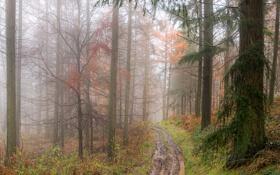 Обои дорога, осень, лужи, сырость, лес. туман