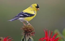 Картинка цветок, птица, перья, клюв, хвост