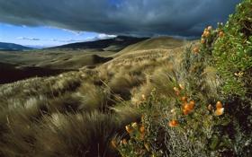 Обои небо, трава, пейзаж, цветы, горы, тучи, холмы