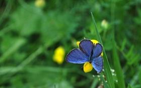 Картинка трава, цветы, бабочка, контраст