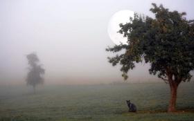 Обои кошка, туман, дерево