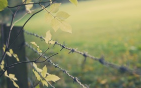 Картинка листья, дерево, забор, проволока
