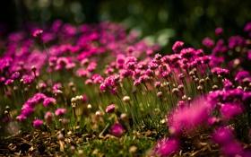 Обои полевые, поляна, яркие, фокус, солнечно, цветы