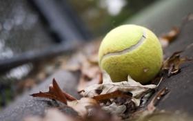 Обои green, yellow, leaves, tennis, ball