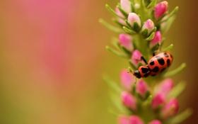 Обои цветок, жук, фокус, насекомое, в крапинку, полевой
