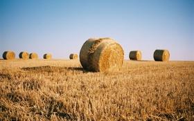 Обои поле, небо, тень, урожай, солнечно, ферма, сена