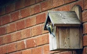 Картинка стена, птица, nesting-box
