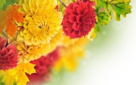 Картинка листья, желтый, красный, лепестки, red, бутоны, yellow