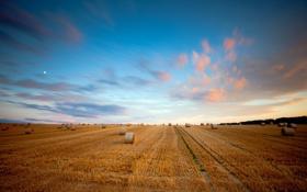 Картинка поле, лето, небо, пейзаж, сено