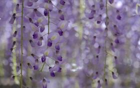 Картинка макро, цветы, растение, лепестки
