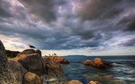 Обои небо, вода, облака, птицы, камни, чайки, Море