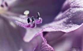 Обои цветы, природа, цвет, красота