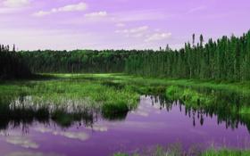Обои лес, небо, трава, облака, деревья, река, зарево