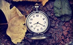 Картинка листья, время, стрелки, часы, цифры