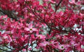 Обои цветы, природа, фото, красота, весна