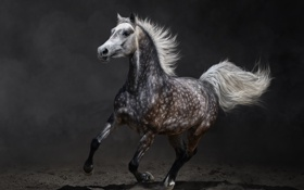 Картинка земля, лошадь, бег, пятна, галоп