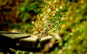 Обои листья, день, скамейка, растения, лавочка, свет, солнце