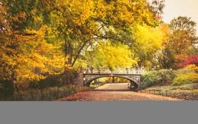 Картинка осень, листья, деревья, мост, парк, путь, люди