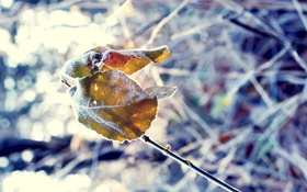 Обои листья, природа, лист, дерево, Макро, ветка, листочек