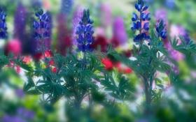 Обои листья, цветы, размытость, синие
