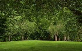 Картинка лес, трава, погода, зелень, поляна, листья, деревья