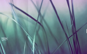 Обои фото, травка, природа, обработка, картинка, растения, фон