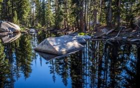 Обои США, камни, Yosemite National Park, солнце, лес, вода, Национальный парк Йосемити