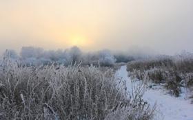 Картинка зима, поле, туман, утро