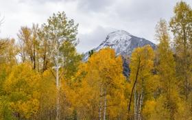 Картинка осень, небо, облака, деревья, гора