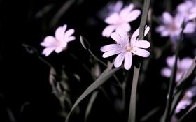 Обои стебель, цветок, растение, макро