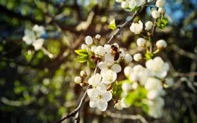 Картинка весна, пчела, цветы