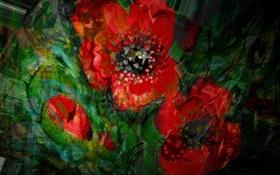 Обои цветы, темный фон, букет, Рисунок, красные