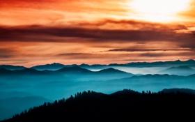 Обои лес, небо, туман, Thoughful Horizon