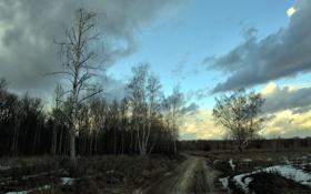 Картинка дорога, деревья, пейзаж, природа, весна