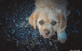 Картинка Собака, Животные, Друг человека