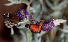 Обои макро, бабочки, насекомые, чветы