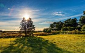 Картинка поле, деревья, Финляндия, Finland