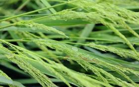 Обои трава, вода, природа