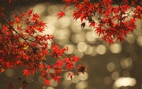 Обои осень, листья, вода, отражение, ветка, блик