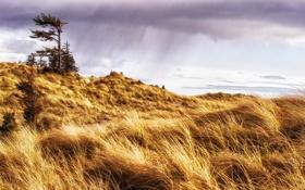 Обои поле, пейзаж, Canada, British Columbia