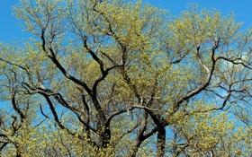 Картинка листья, ветки, природа, дерево, голубое небо