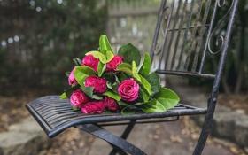 Обои цветы, розы, стул