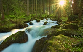 Картинка лес, солнце, лучи, природа, река, камни, мох