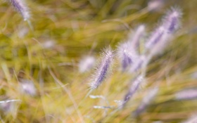 Картинка цветы, трава, боке