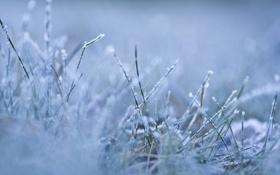 Обои холод, утро, мороз, frozen