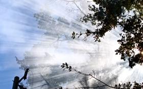 Обои пейзаж, небо, облака, листья, деревья, природа, свет