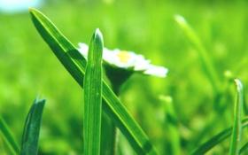 Обои трава, макро, цветы, свежесть, природа, весна, весенние картинки
