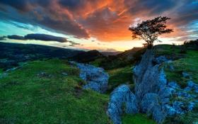 Обои закат, камни, трава, небо, дерево, сноудония, склон