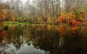 Картинка лес, осень, небо, пруд, озеро, деревья, туман