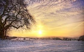 Обои зима, поле, снег, дерево